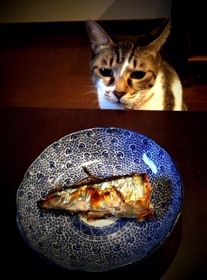 『猫に秋刀魚』  撮影:M.Kobayashi