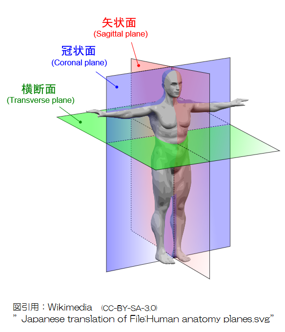 冠状面 矢状面  Human_anatomy_planes-JA CC3_0