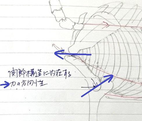 馬体の関節内の力の方向性