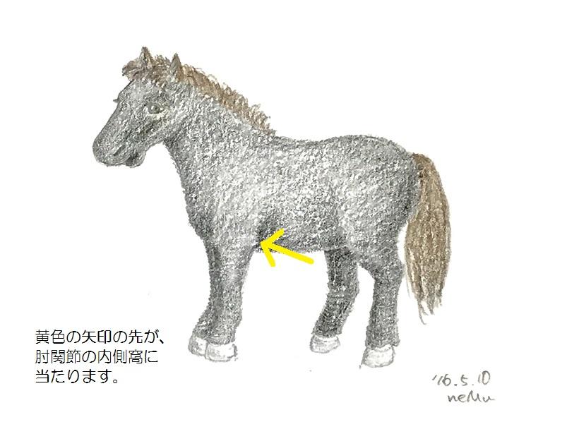 馬の肘関節の内側窩