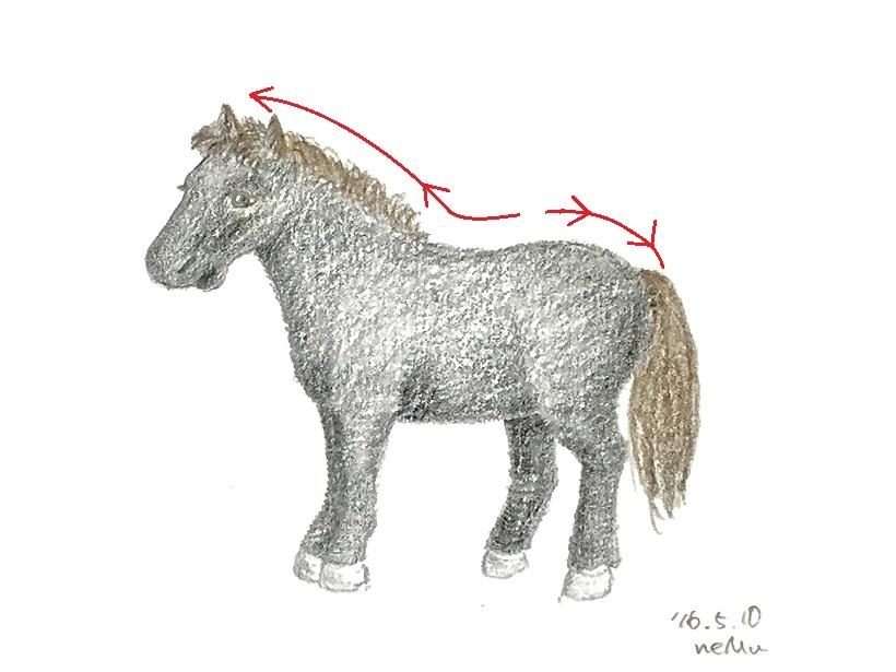 ジャック-背部と骨盤のゆるみの方向性