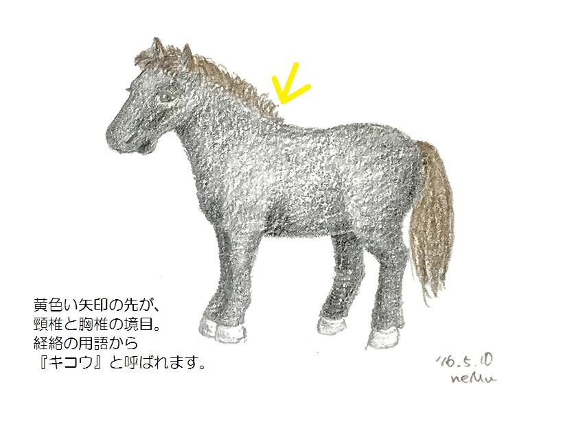 馬のキコウの位置